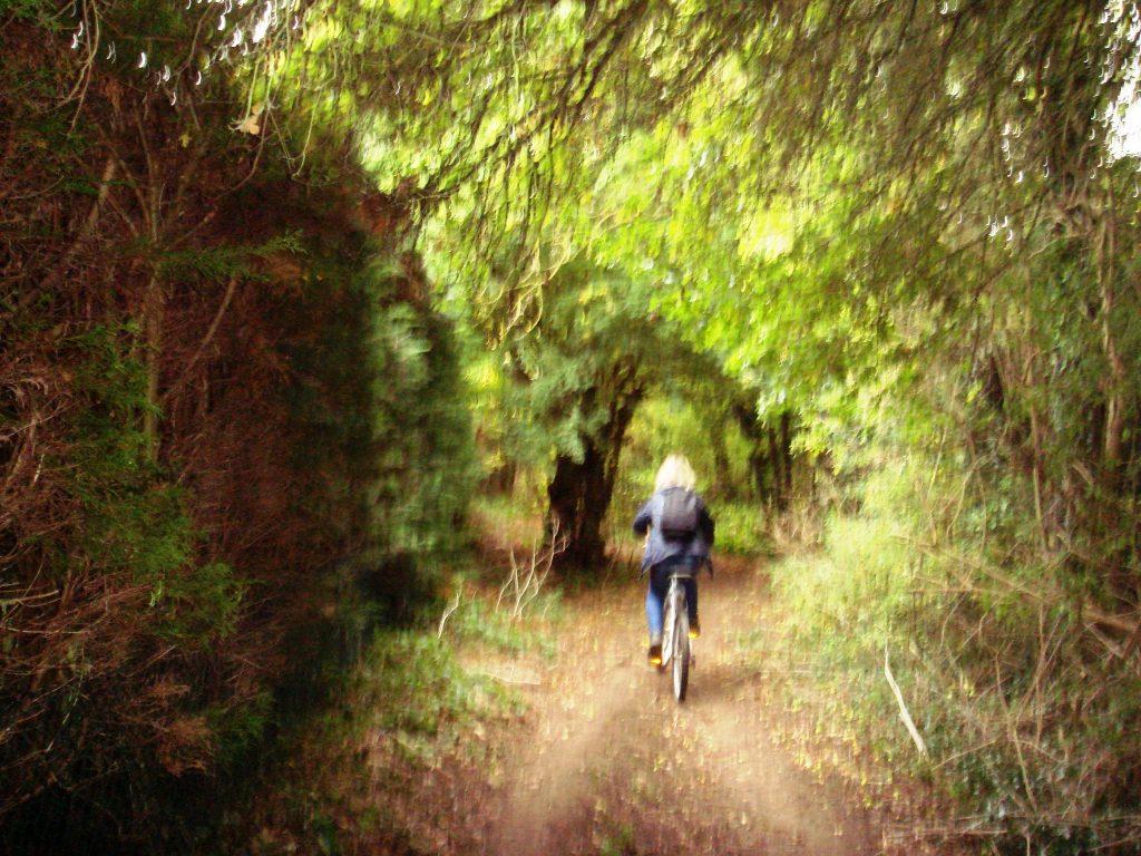 Path through the woods from Charlbury