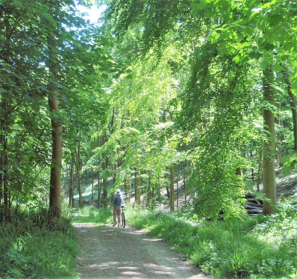 circular cycle route through Beechwoods near Sheepscombe